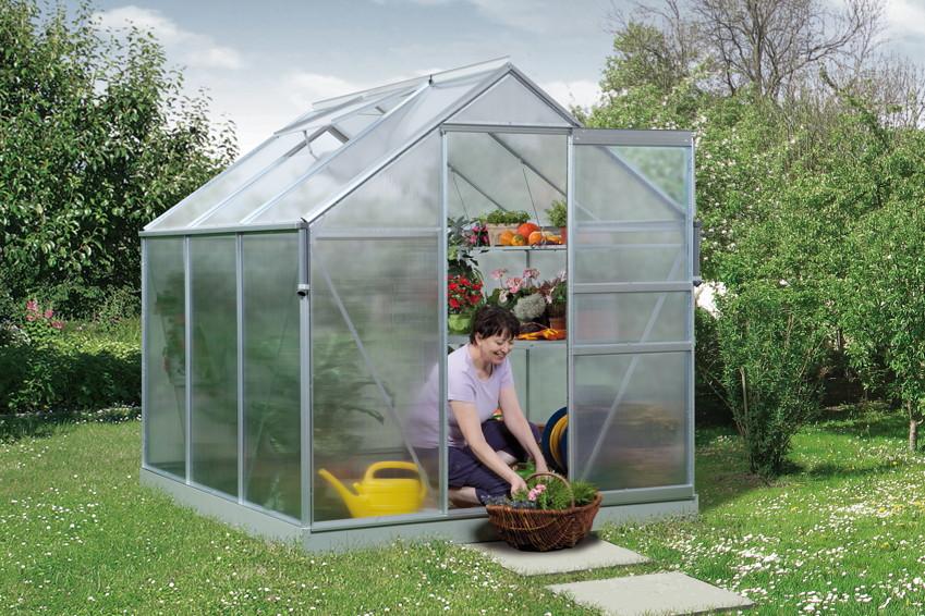 gew chsh user aus alu baumschule pflanzen gro e pflanzen und b ume. Black Bedroom Furniture Sets. Home Design Ideas